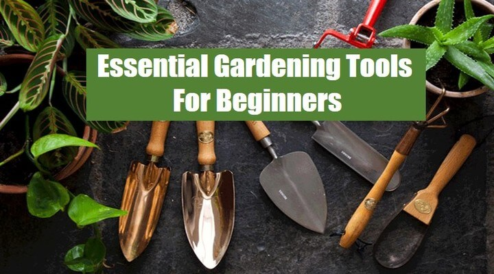 Essential Gardening Tools For Beginners:The Complete List