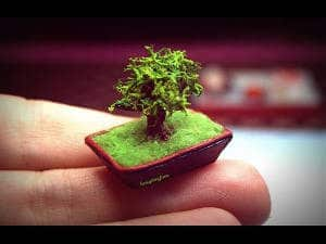 miniature-bonsai