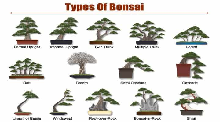 types-of-bonsai