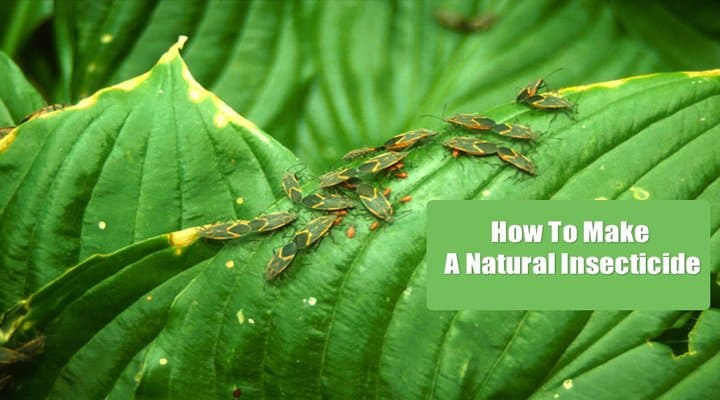 How to Make a Natural Insecticide for Garden[Complete Guide]