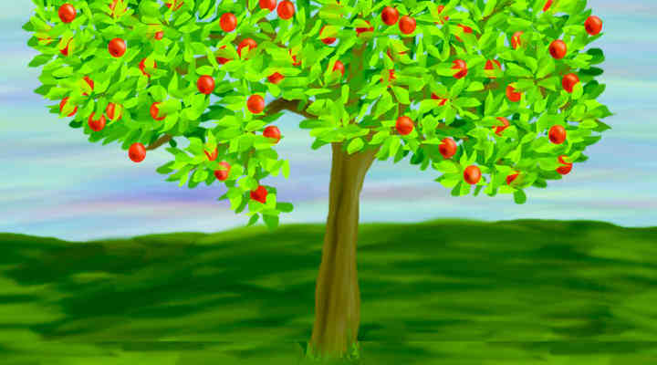 How to Plant an Apple Tree from Seed and In Pot or Container