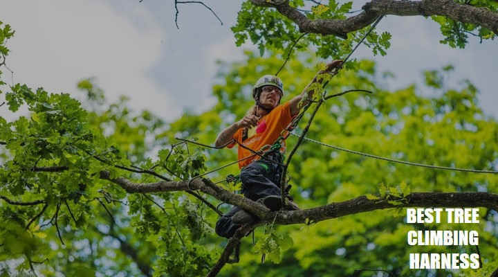 Best Tree Climbing Harness