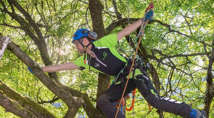 Best Rope for Tree Climbing in 2020: Top 7 Recommendations